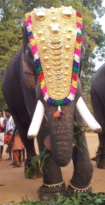 An elephant in Kerala, India