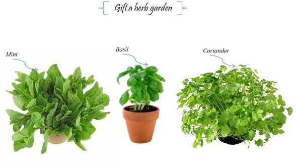 Gift a herb garden
